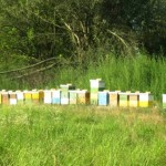 Eko pčelarstvo Gusak